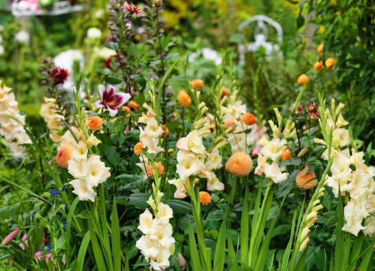 Jakie kwiaty cebulowe warto wybrać do ogrodu?