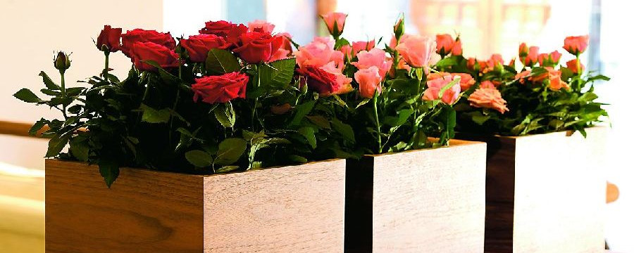 Róże W Domu I Ogrodzie Jak O Nie Dbać Czasnawnętrze