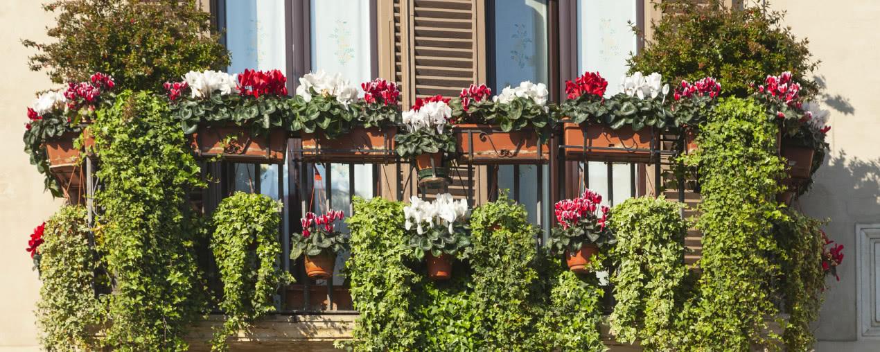 Balkon Caly We Kwiatach Czasnawnetrze