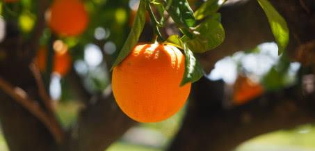 Cięcie drzew owocowych - 3 najważniejsze zasady
