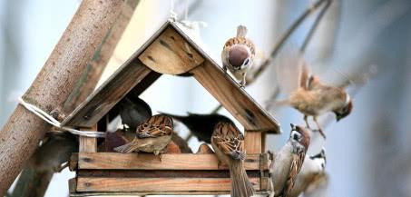Jak samodzielnie wykonać karmnik dla ptaków?
