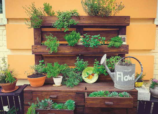 Bądź eko! Uprawiaj zioła i warzywa!