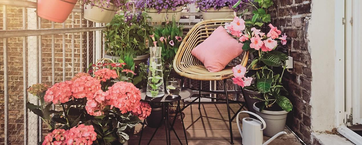 Jakie Kwiaty Na Balkon Czasnawnetrze