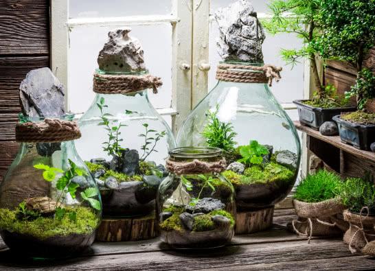 Las w słoiku - jak zrobić, gdzie kupić, jakie rośliny wybrać?