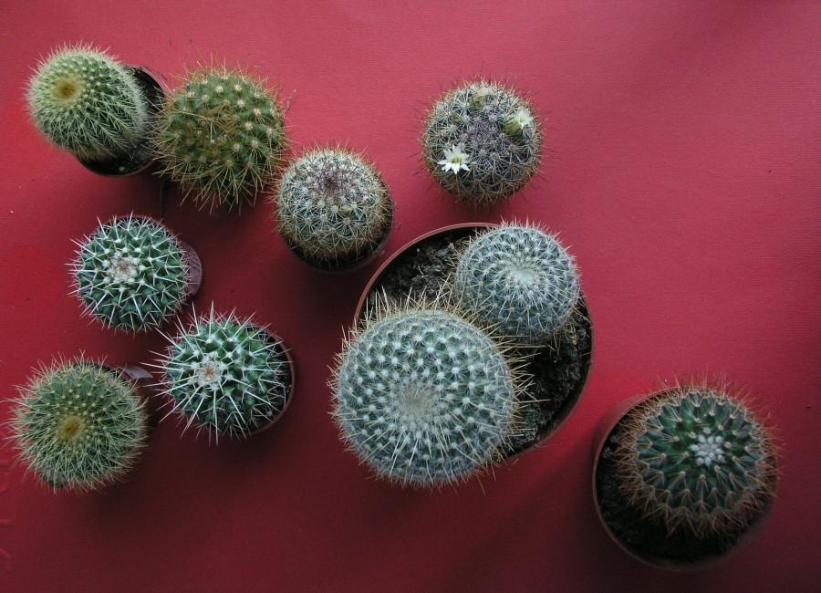 Uprawa Kaktusów W Okresie Zimowania Czasnawnętrze