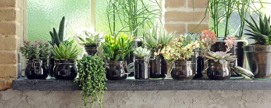 Sukulenty Rośliny Dla Zapominalskich Czasnawnętrze