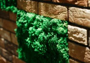 Zielona ściana z mchu w mieszkaniu - jak ją założyć?